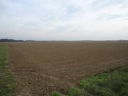 Sjetva pšenice DSC00697