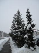 Crnogorične šume DSC01349