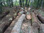 Izrada ogrijevnog drva - Page 13 DSC09520