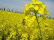 Pčelarstvo     - Page 3 340690_313749601975220_355875897_o