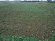 Sjetva pšenice DSC00722