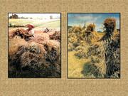 Agrar & selo u sjeni prošlosti - Page 2 Z11
