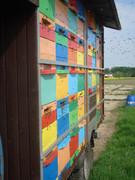 Pčelarstvo     - Page 3 383077_313747508642096_1156649604_n