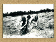 Agrar & selo u sjeni prošlosti - Page 2 Zetva3