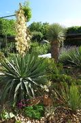 Léto na zahradě - Stránka 3 IMG_1801