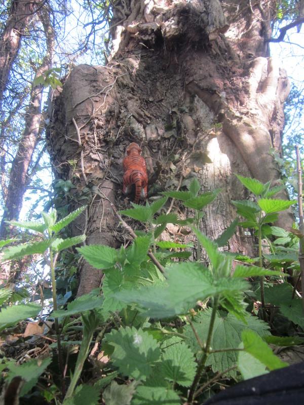 Tiger Woodland Random Pictures. IMG_5164