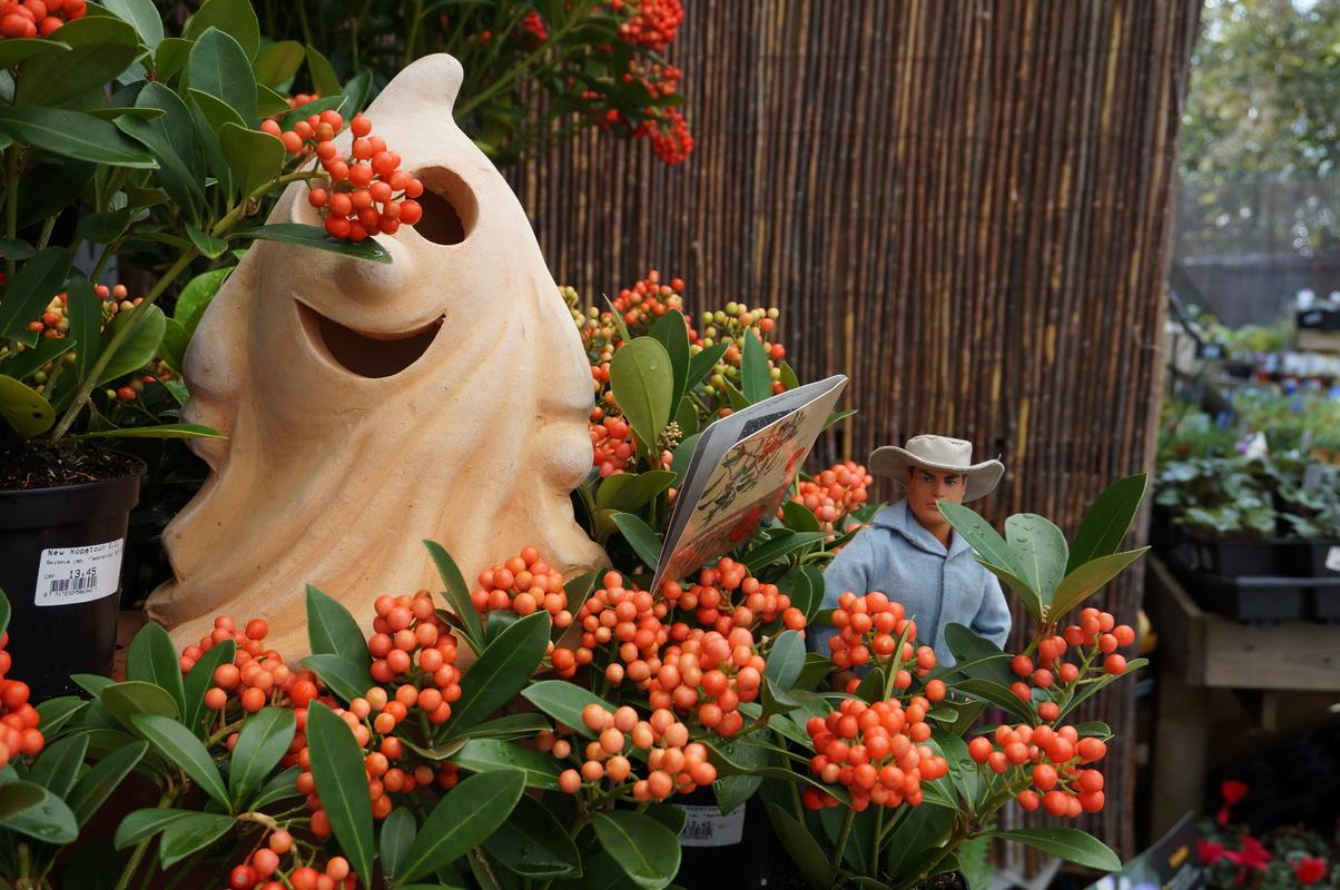 Random Action Man Photos at Hopton garden center. DSC00585