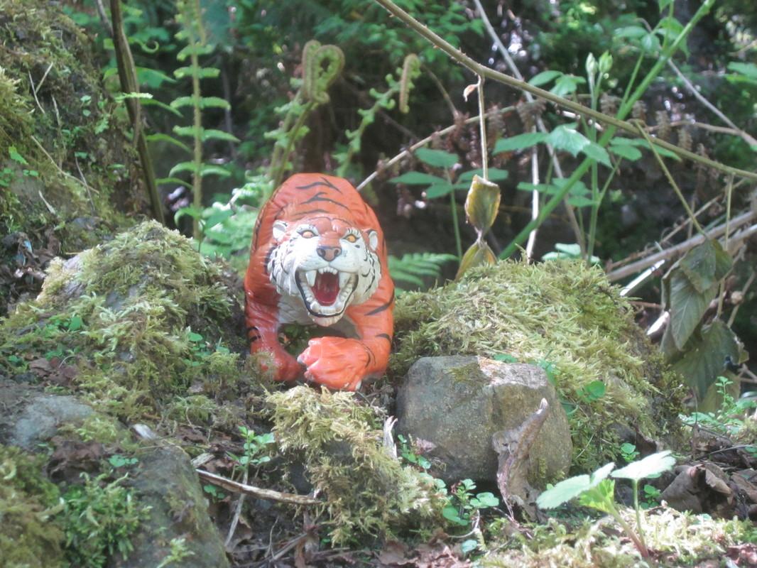 Tiger Woodland Random Pictures. IMG_5176