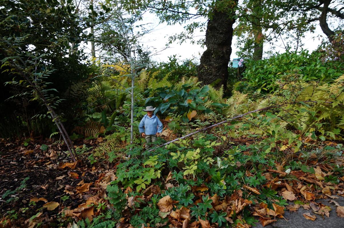 Random Action Man Photos at Hopton garden center. DSC00592