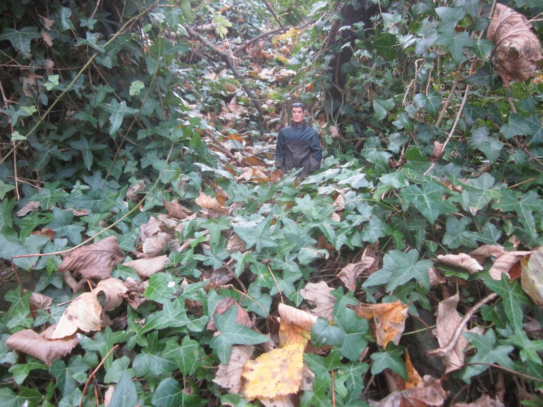 My MAM going on a long autumn walk. IMG_5588