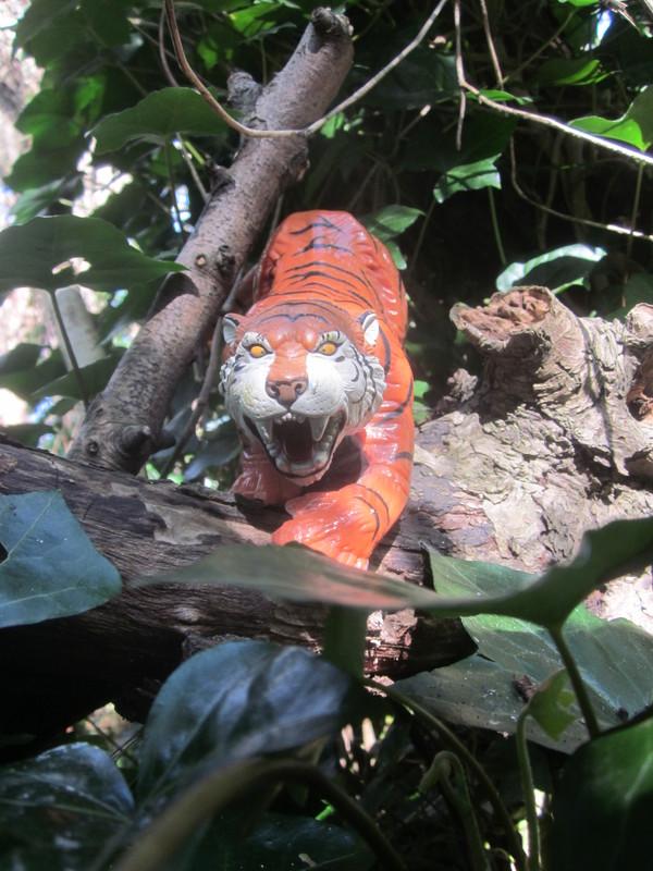 Tiger Woodland Random Pictures. IMG_5152