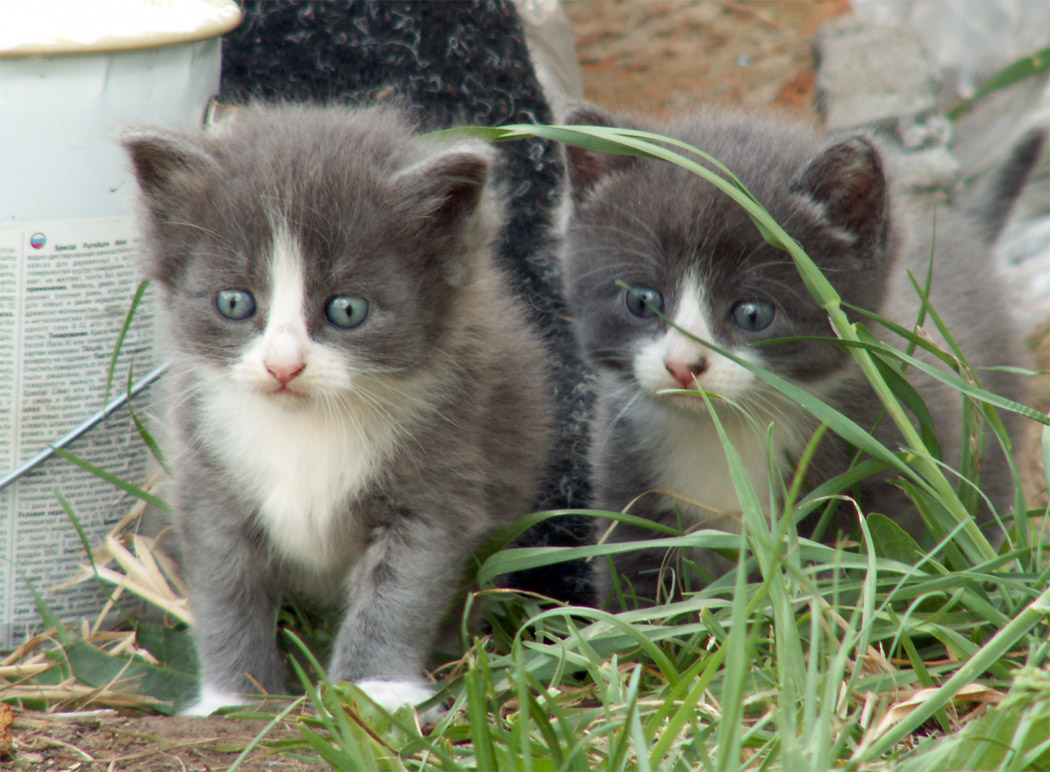 Фотографии Cats