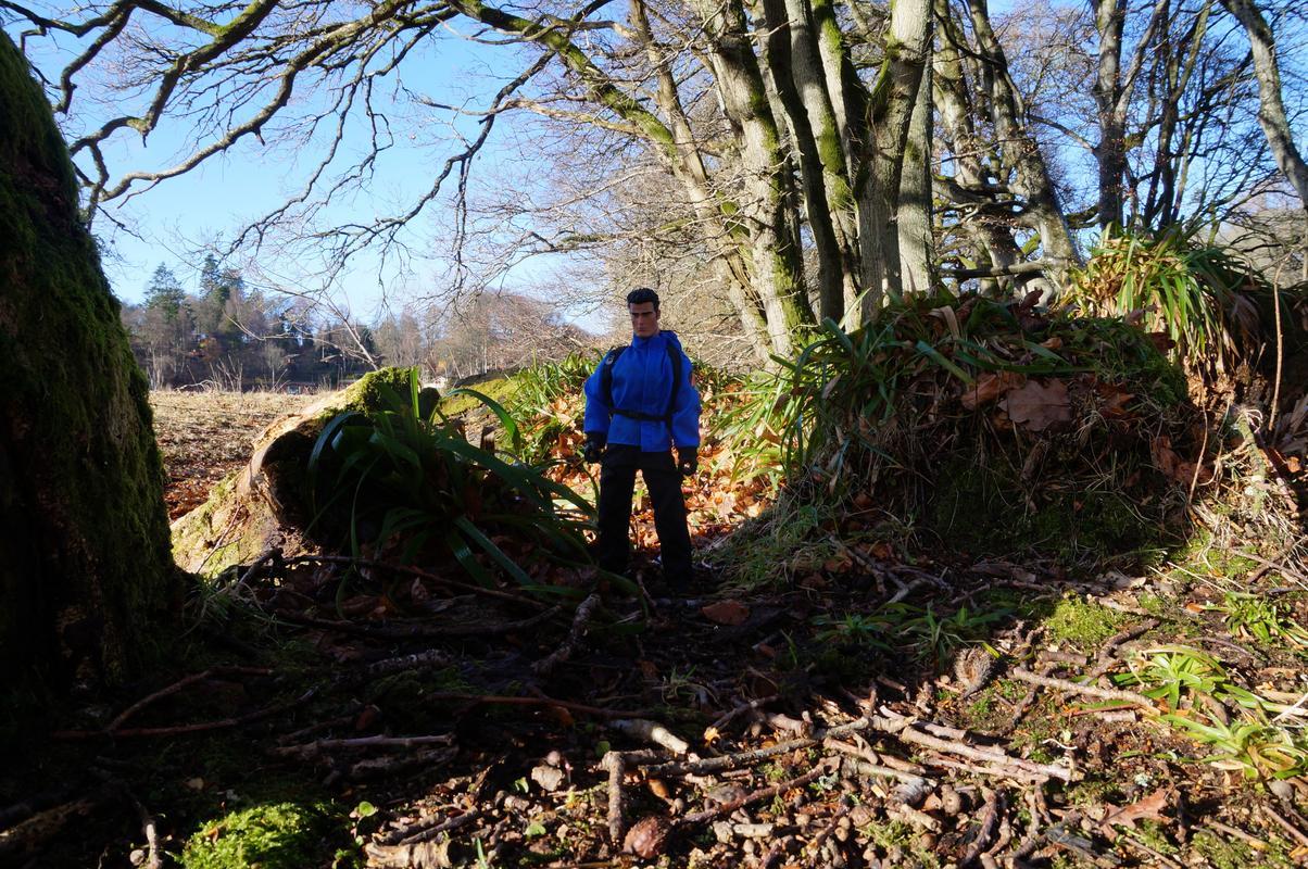 Woodland Dunkeld random pictures.  B47_BC482-262_C-4539-_BA97-2_B136_D73_F6_D3