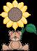 sunflowerbrat