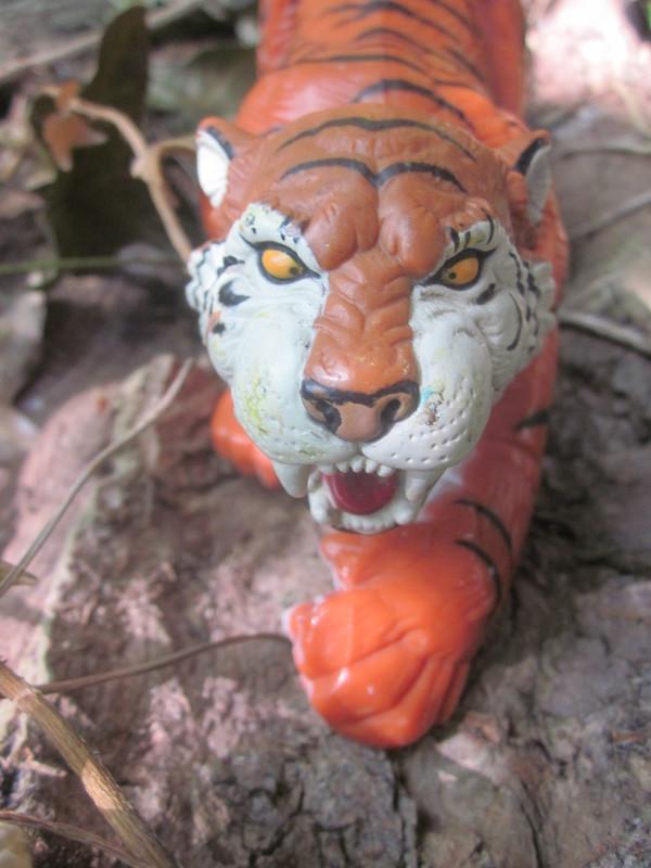 Tiger Woodland Random Pictures. IMG_5167