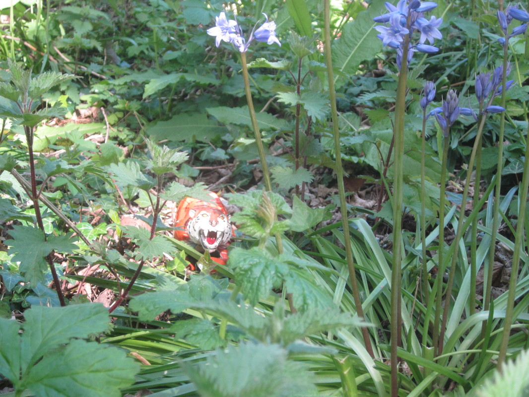 Tiger Woodland Random Pictures. IMG_5168
