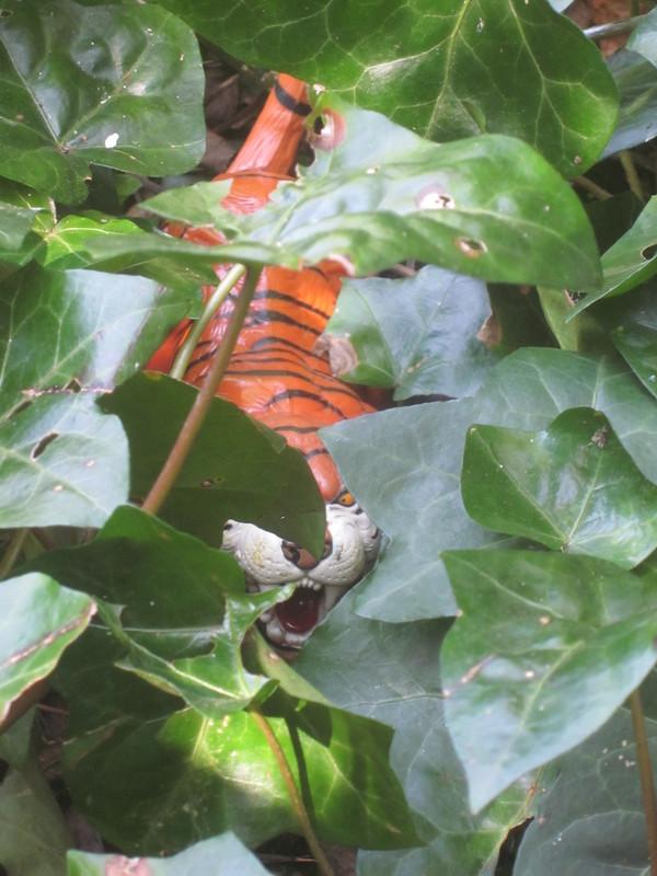 Tiger Woodland Random Pictures. IMG_5160