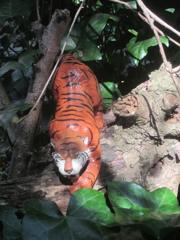 Tiger Woodland Random Pictures. IMG_5151