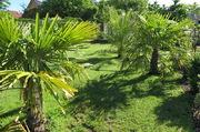 Léto na zahradě - Stránka 3 IMG_1782