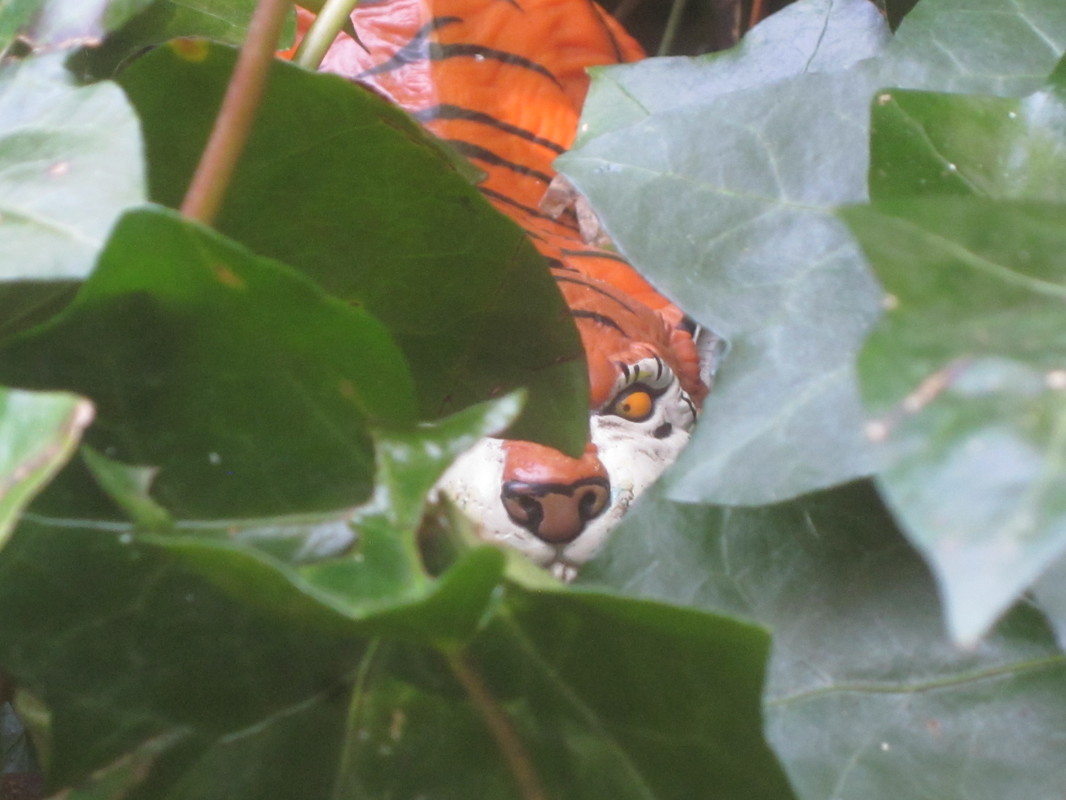 Tiger Woodland Random Pictures. IMG_5161