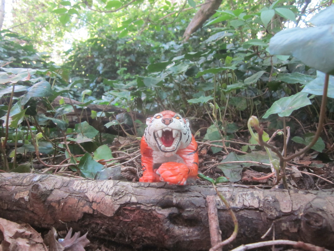 Tiger Woodland Random Pictures. IMG_5146