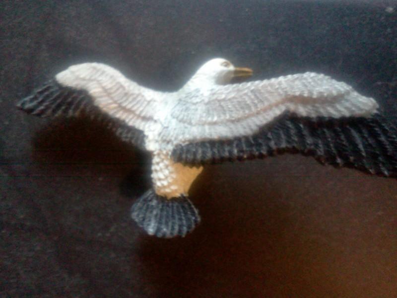 Broken Seagull :( IMG2675