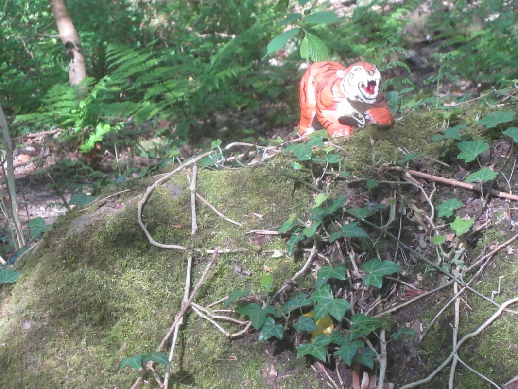 Tiger Woodland Random Pictures. IMG_5171