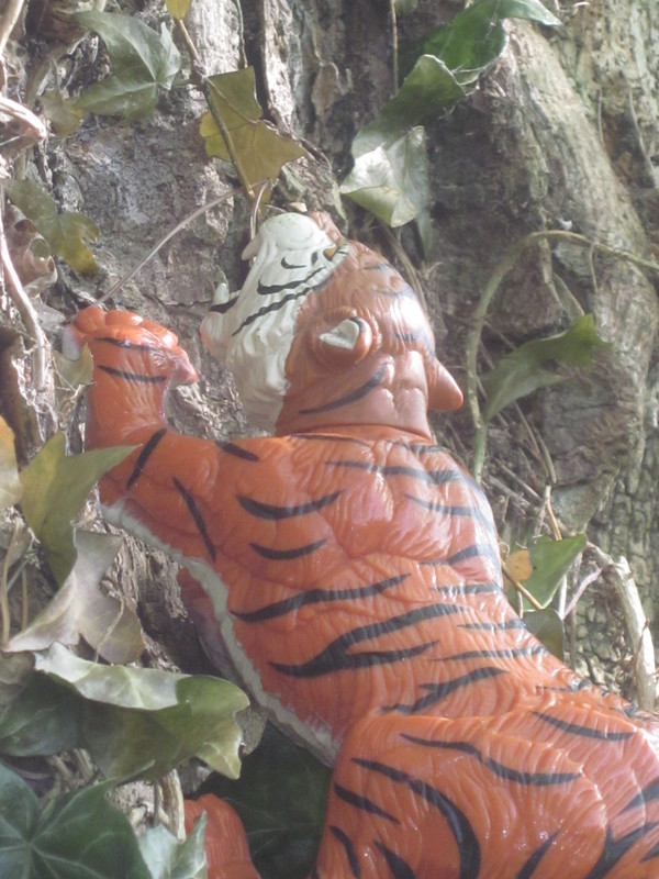Tiger Woodland Random Pictures. IMG_5165