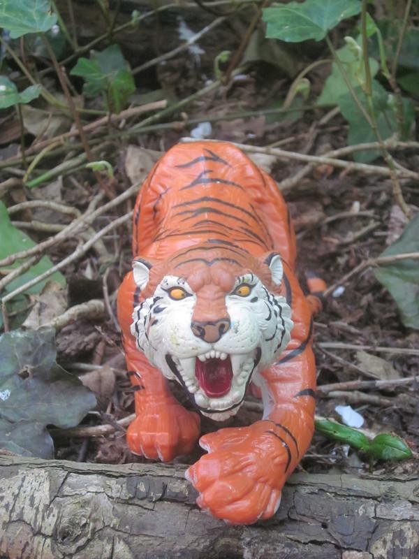 Tiger Woodland Random Pictures. IMG_5147