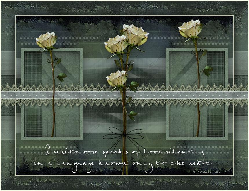 White Roses 785
