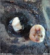 Cocos nucifera - Stránka 3 DSC07168