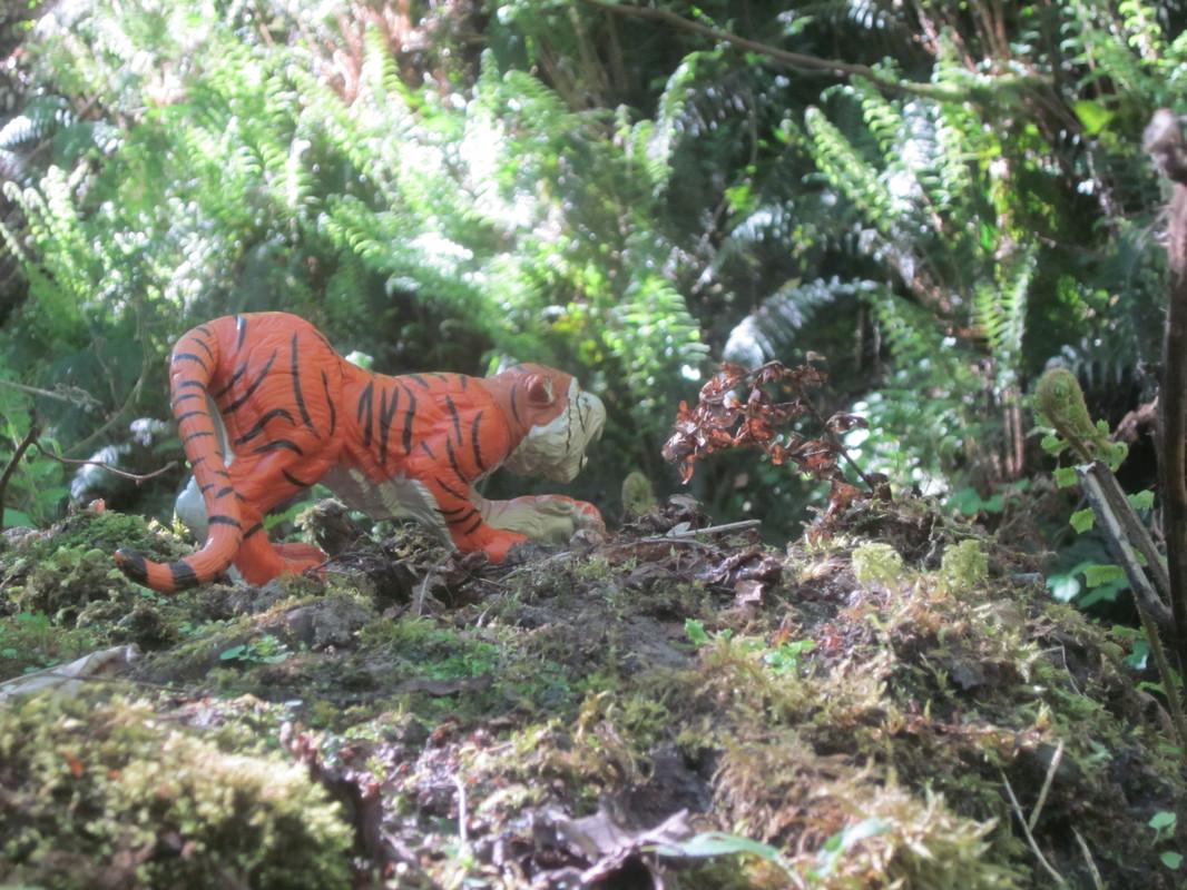 Tiger Woodland Random Pictures. IMG_5172