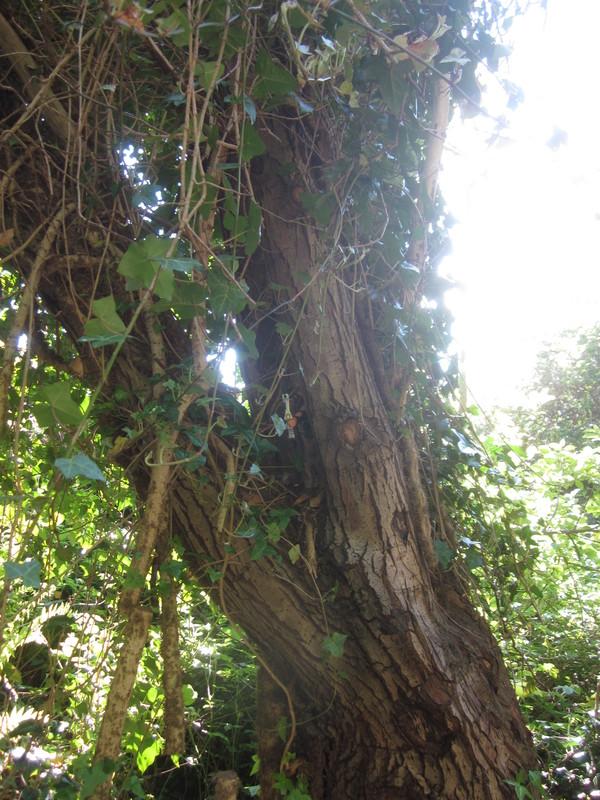 Woodland bowman random woodland photos. IMG_4600