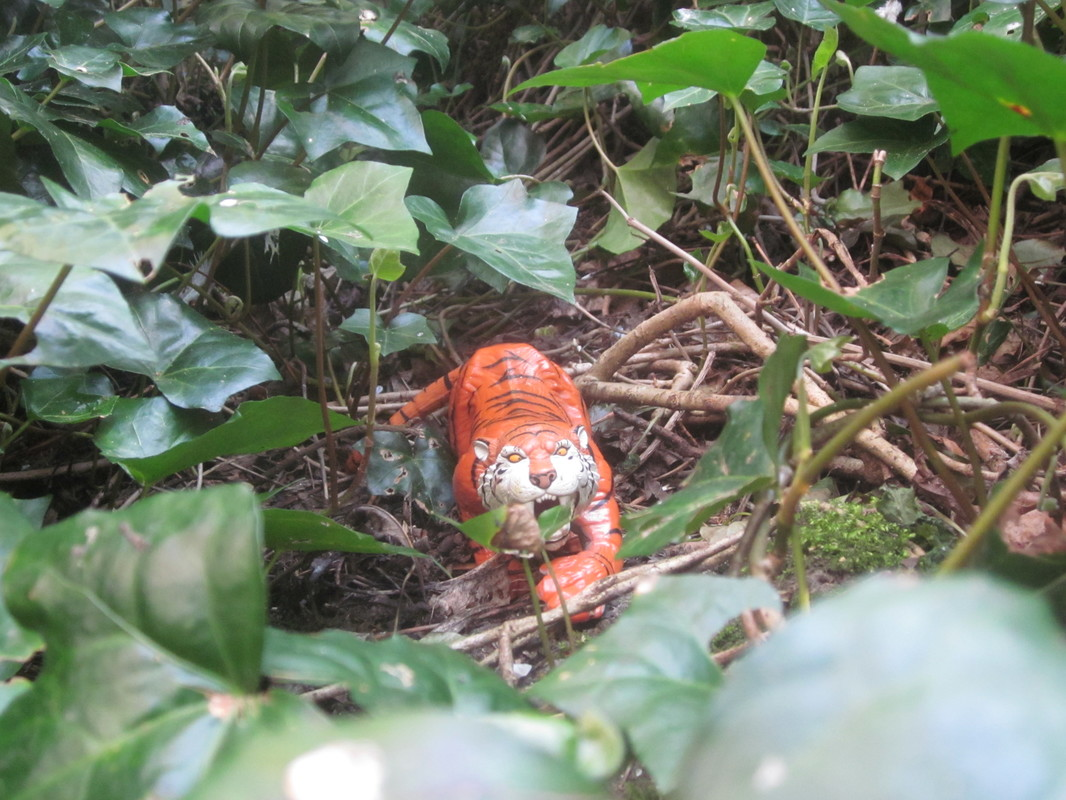 Tiger Woodland Random Pictures. IMG_5155