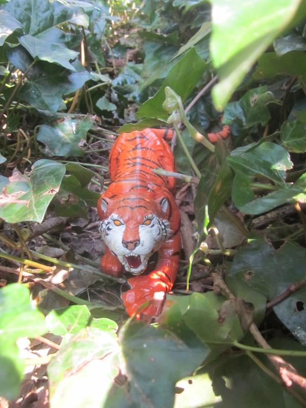 Tiger Woodland Random Pictures. IMG_5159