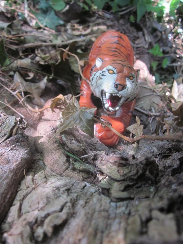 Tiger Woodland Random Pictures. IMG_5166