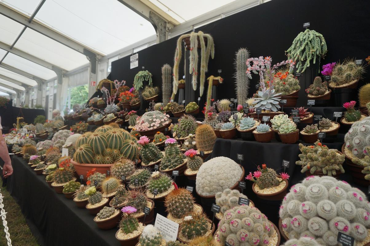 My Mam visiting Hampton Court flower show.  BDFCF780-_A59_D-4_AFD-949_A-_BE136_F231899