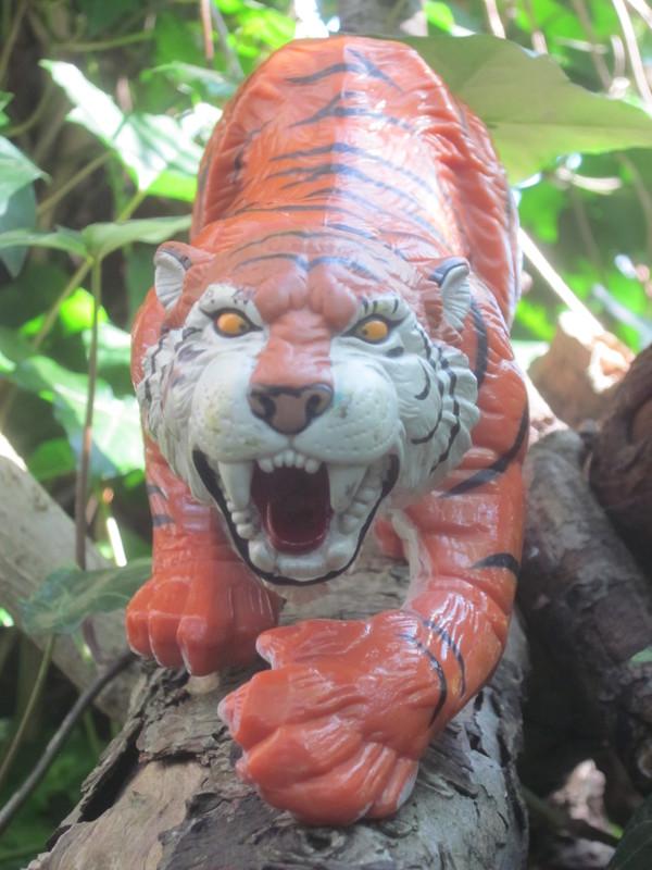 Tiger Woodland Random Pictures. IMG_5150