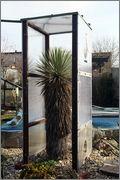 Mrazuodolné juky - rod Yucca - Stránka 5 Thop_1