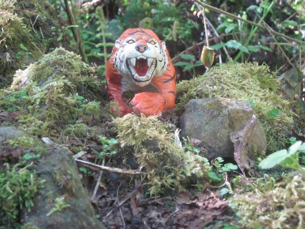 Tiger Woodland Random Pictures. IMG_5175