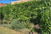 Léto na zahradě - Stránka 2 L_to8