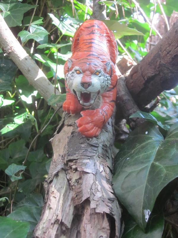 Tiger Woodland Random Pictures. IMG_5149