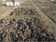 Gnojidba povrća DSC01596