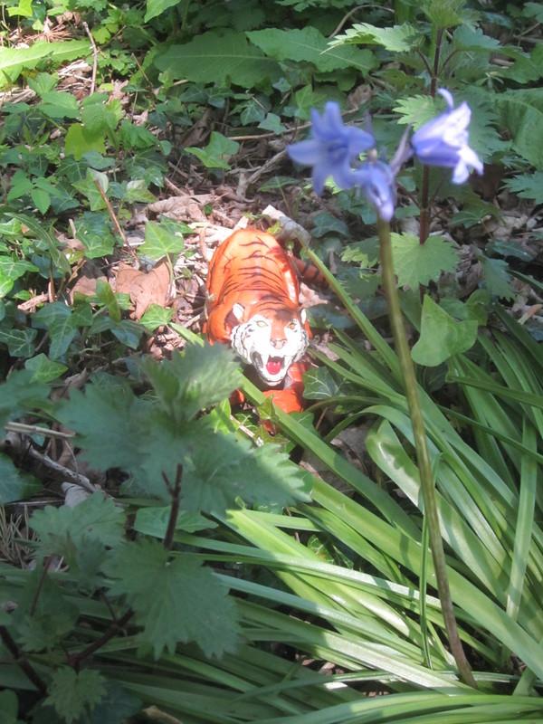 Tiger Woodland Random Pictures. IMG_5169