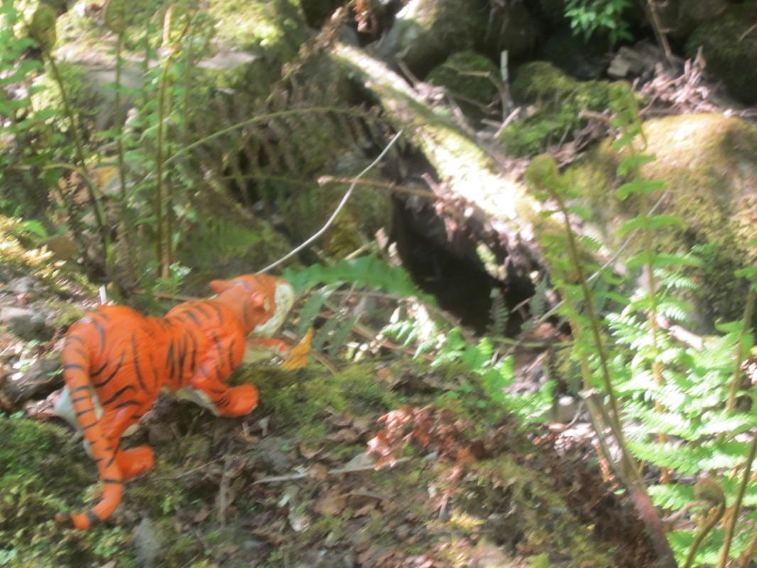 Tiger Woodland Random Pictures. IMG_5173