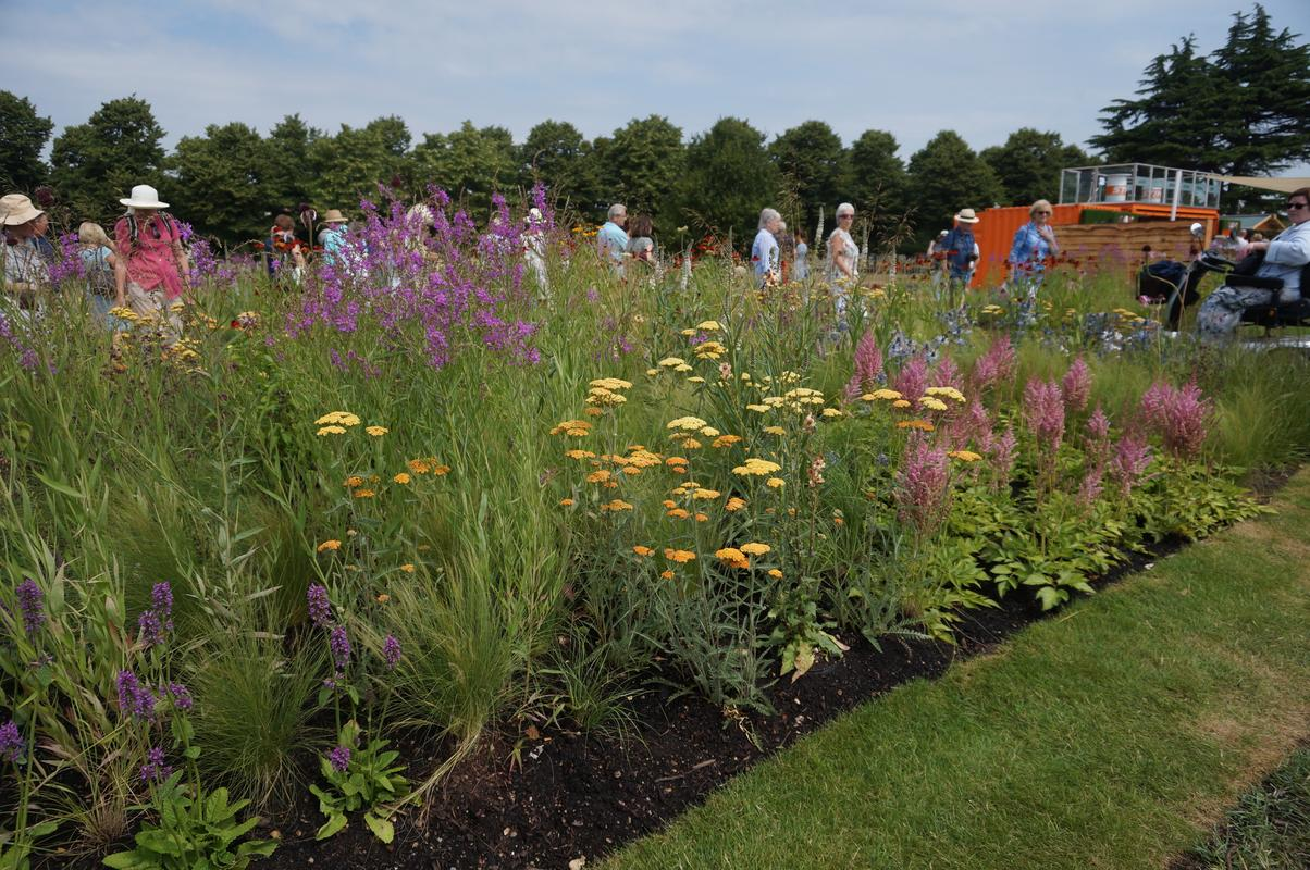 My Mam visiting Hampton Court flower show.  1_C201012-0_AD0-4922-_B9_D0-_A1454_C1_A2_AF4