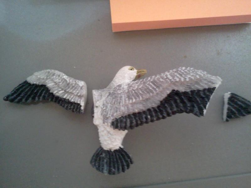 Broken Seagull :( IMG2704