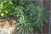 Léto na zahradě - Stránka 2 L_to10