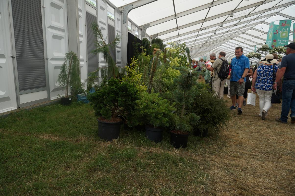 My Mam visiting Hampton Court flower show.  1385_AC03-4_BFB-4_BD9-9477-137_DDB74_E47_B