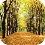 Осенние аватарки - Страница 2 1mPTl